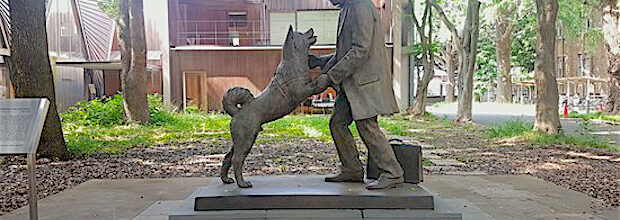 Will you be loyal like Hachikō?